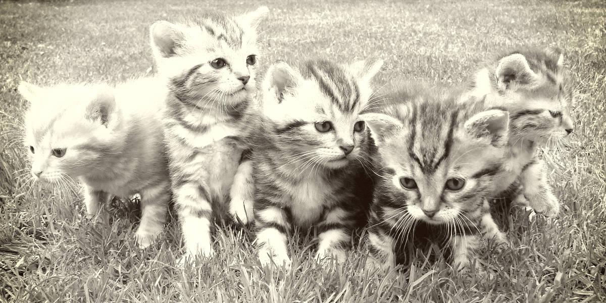 rarest-cat-breeds