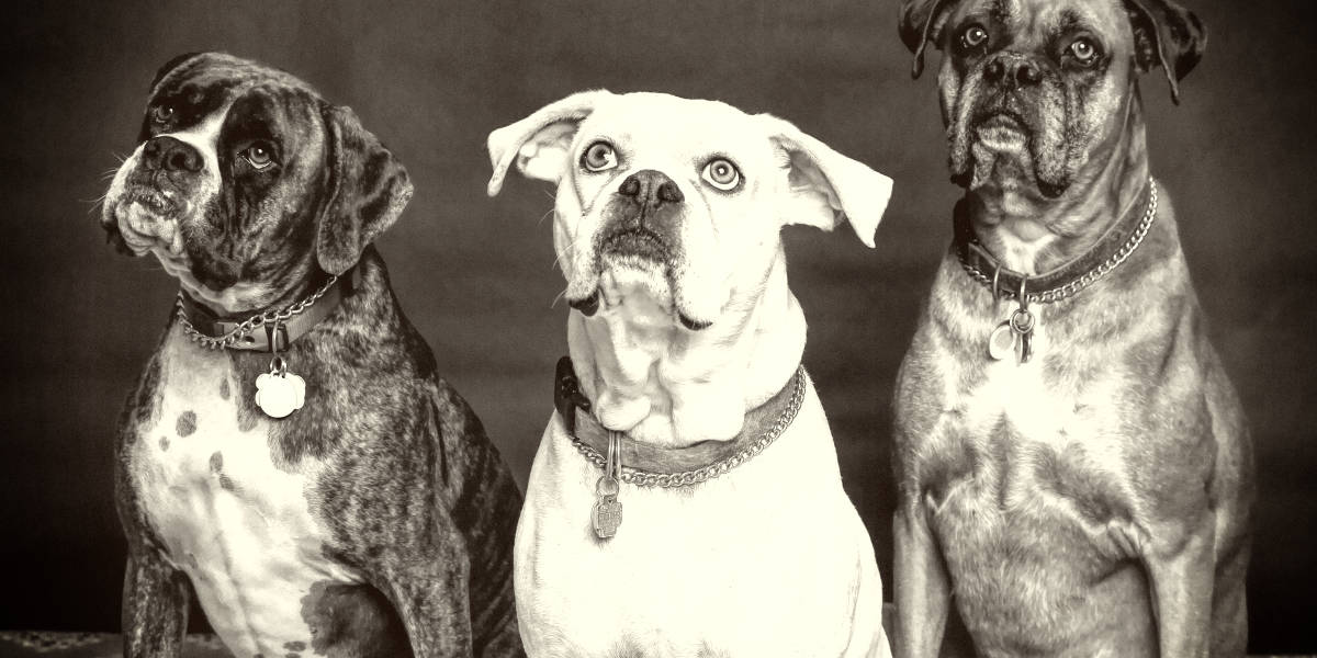 rarest-dog-breeds