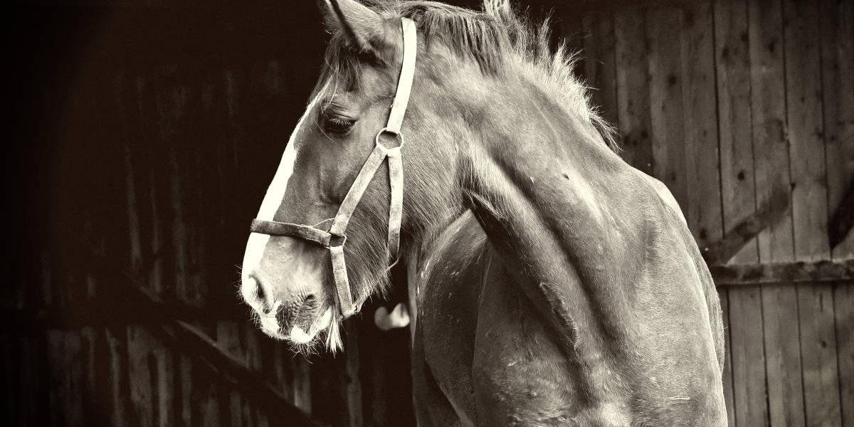10 Rarest Horse Breeds In The World Rarest Org