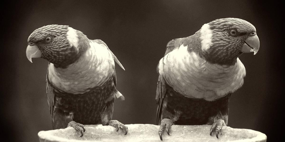 rarest-parrots