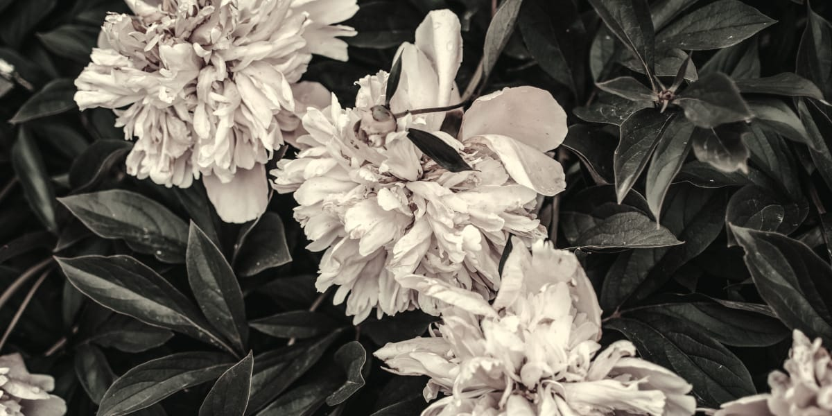 rarest-plants