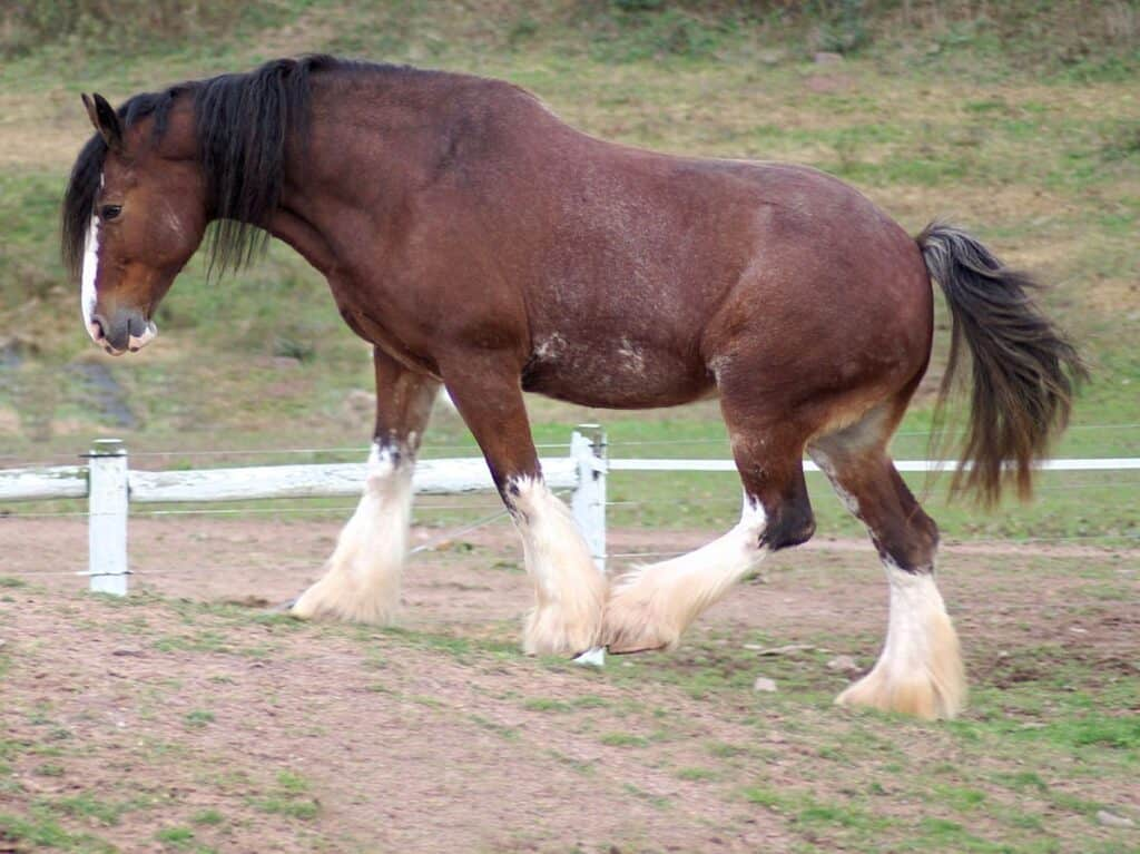 Clydesdale Horses - $2,500