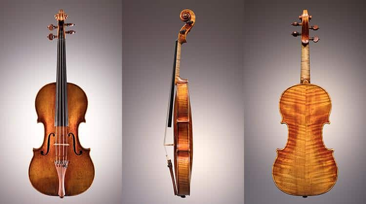 Dolphin Stradivarius