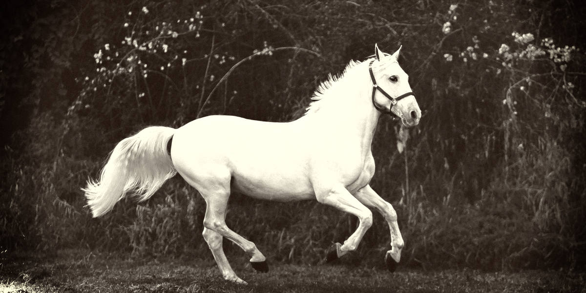 Most Expensive Horse Breeds